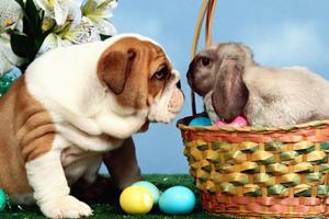 Velikonoční ordinační doba